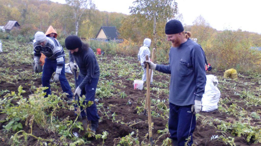 Братия монастыря во главе с епископом Феодором приняли участие в уборке картофеля на монастырском огороде.